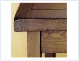agujeros termitas