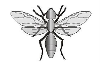 hormiga alúa