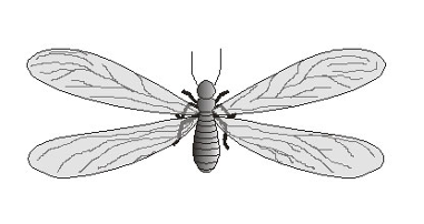 termita subterránea