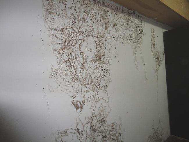 termitas subterráneas